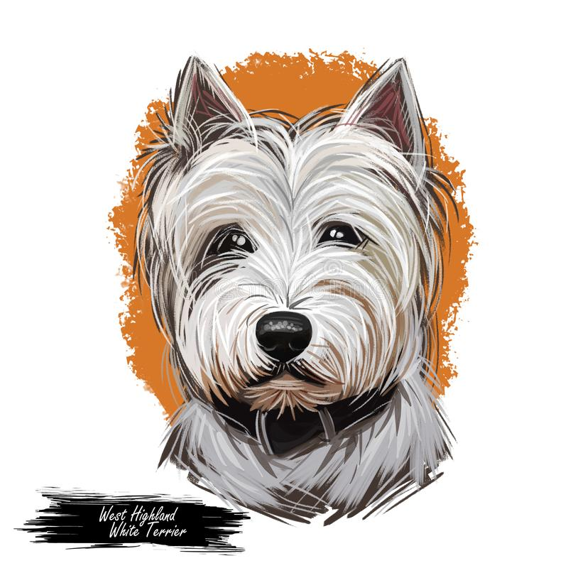West Highland White Terrier or Westie dog breed portrait isolated on white. Digital art illustration, watercolor drawing of hand vector illustration