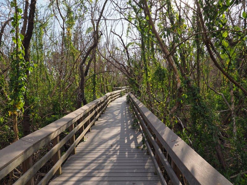 West Lake Boardwalk (Parco nazionale delle Everglades) immagine stock libera da diritti