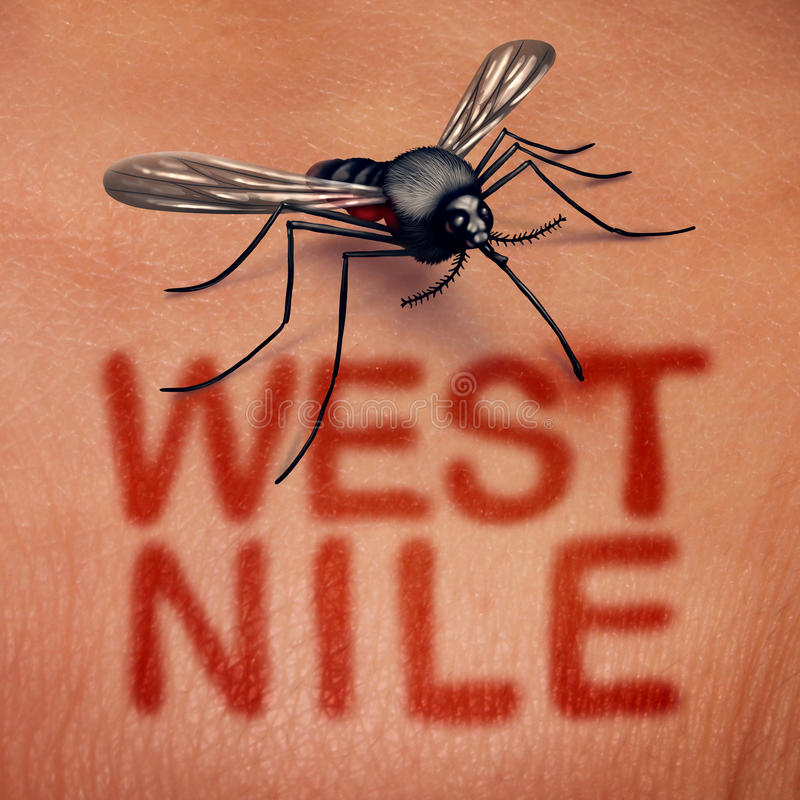 West Nile Disease. West nile virus disease as a mosquito borne illness as a bite on human anatomy with red text on skin as a medical infection syndrome symbol in stock illustration