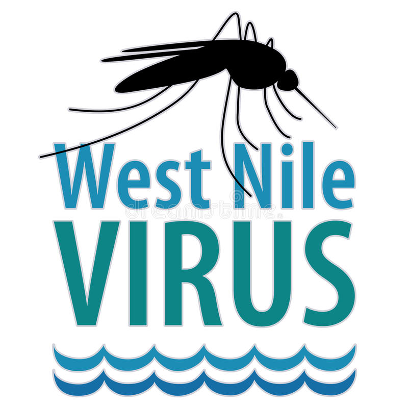 West Nile Virus. Mosquito, standing water, graphic illustration, isolated on white. EPS8 compatible royalty free illustration