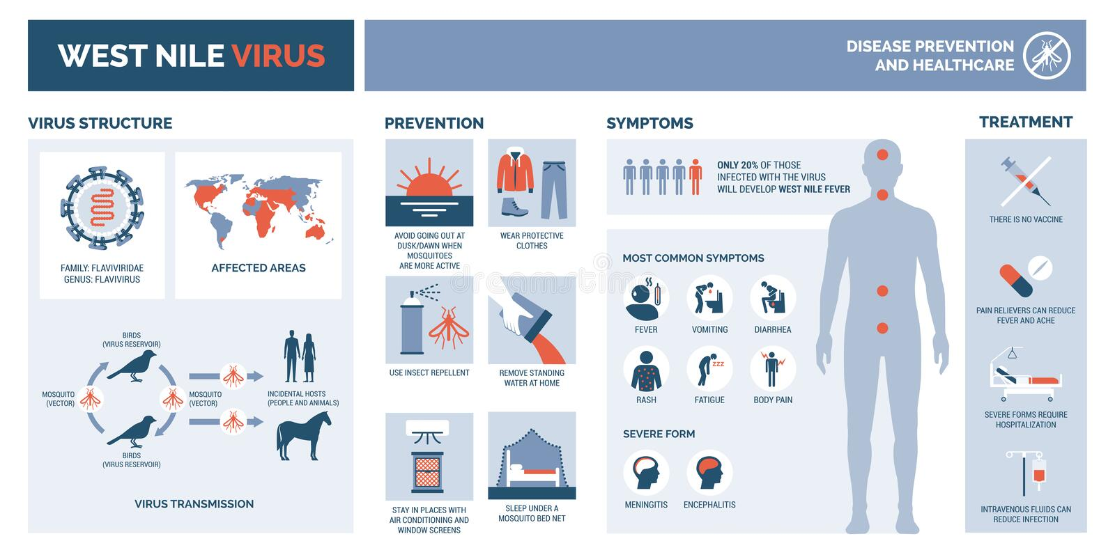 West nile virus infographic. Virus structure, transmission, prevention, symptims and treatment vector illustration