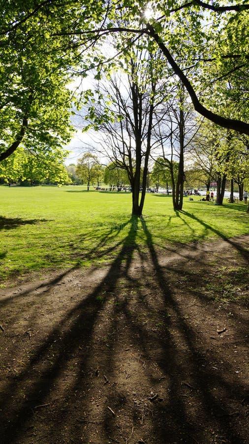 West park munich sunset daytime spring tree shadow stock photos