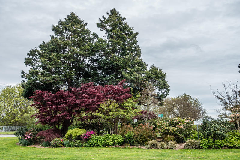 West-Seattle-Park 4 lizenzfreies stockfoto