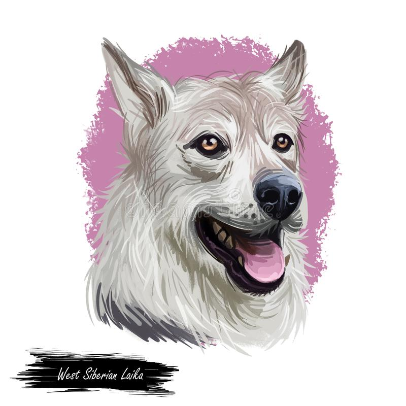 West Siberian Laika dog breed portrait isolated on white. Digital art illustration, animal watercolor drawing of hand drawn doggy stock illustration