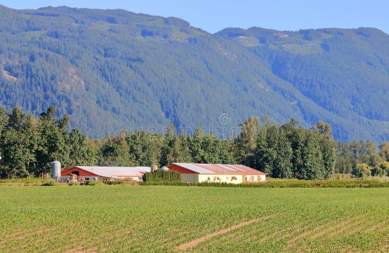 West-Washington- und Sumas-Gebirgszug stockbild