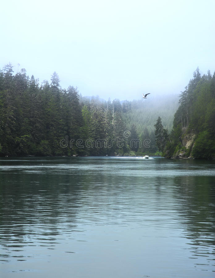 Westcoast trail, Canada. A river crossing while hiking the westcoast trail of Canada royalty free stock image