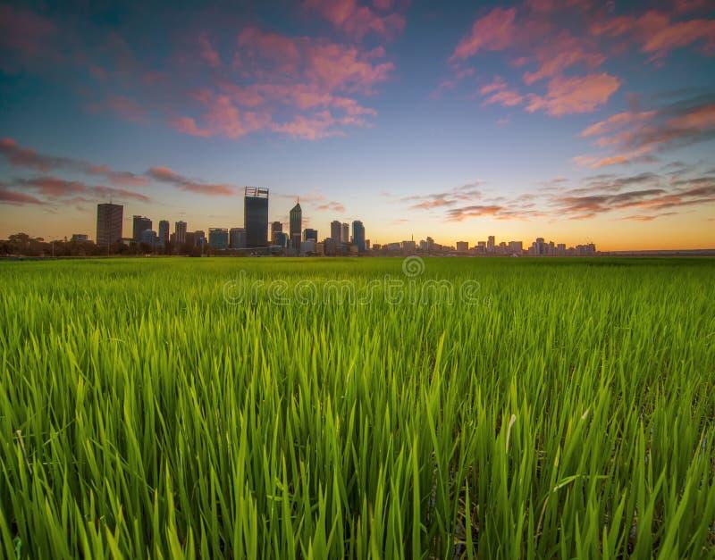 Westelijk Australië - Gouden Zonsopgangmening van de Horizon van Perth van Sw stock afbeeldingen
