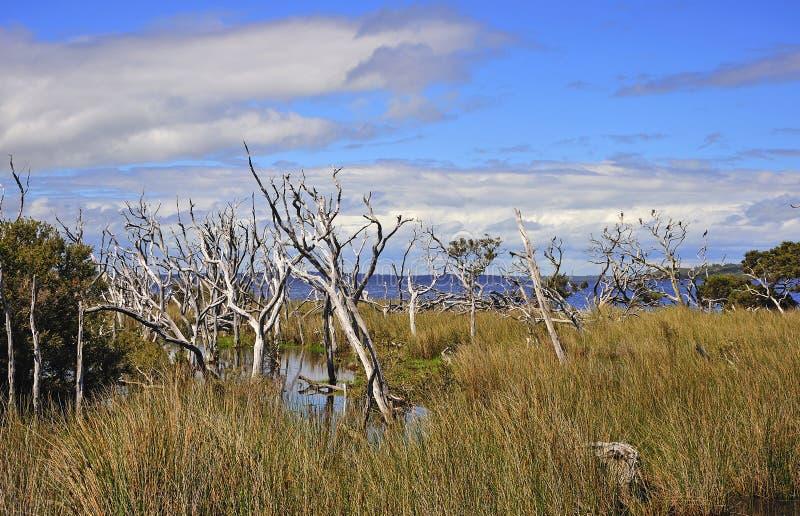 Westelijk Australië: Het park van D'entrecasteaux n. stock foto's