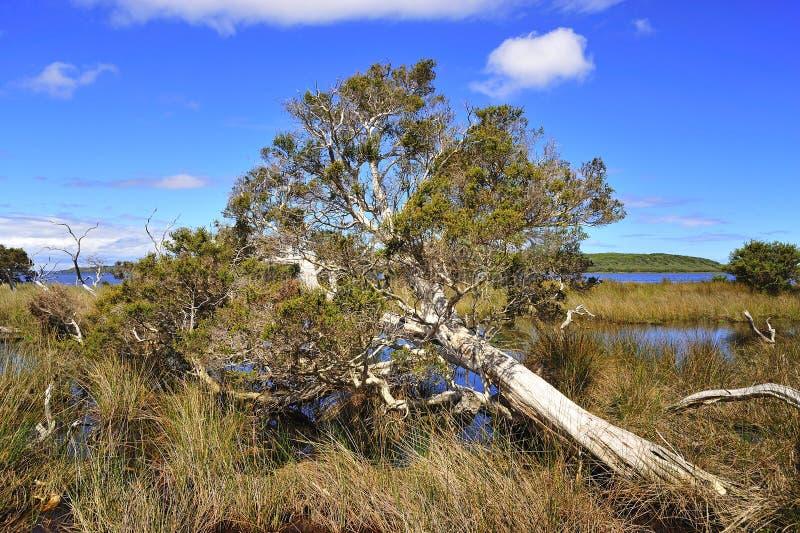 Westelijk Australië: Het park van D'entrecasteaux n. stock afbeeldingen