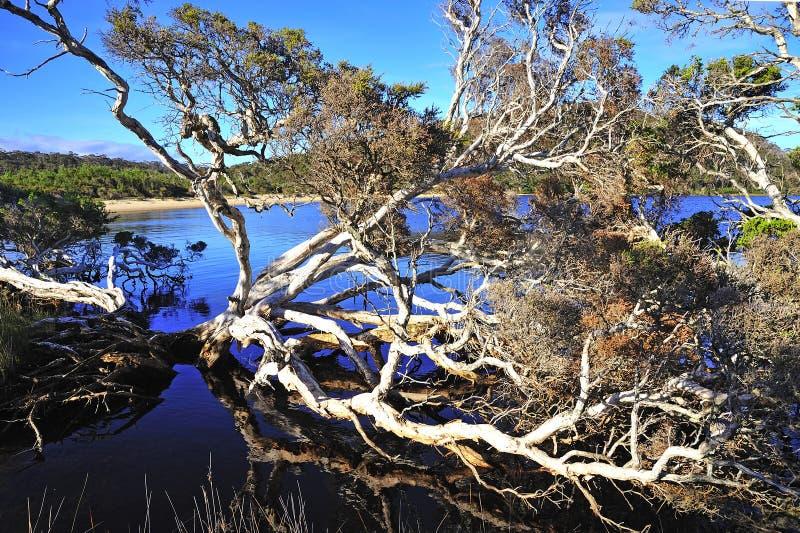 Westelijk Australië: Het park van D'entrecasteaux n. stock fotografie