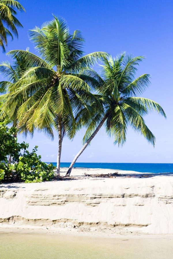 Westelijke kust van Tobago royalty-vrije stock fotografie