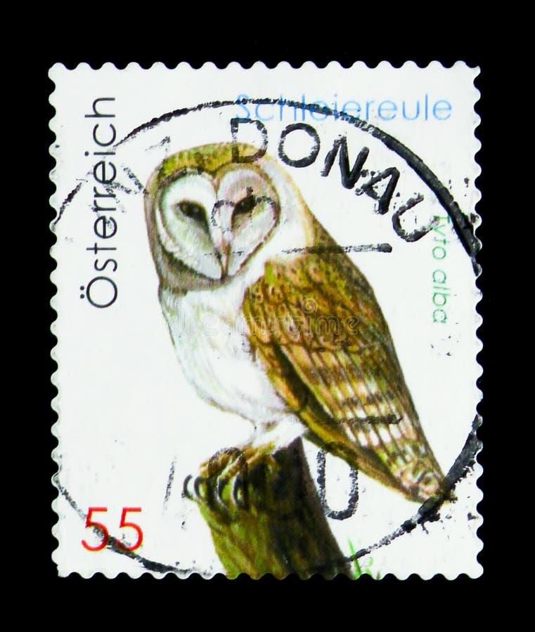 Westelijke Schuuruil (alba Tyto), het Wild serie, circa 2009 stock fotografie
