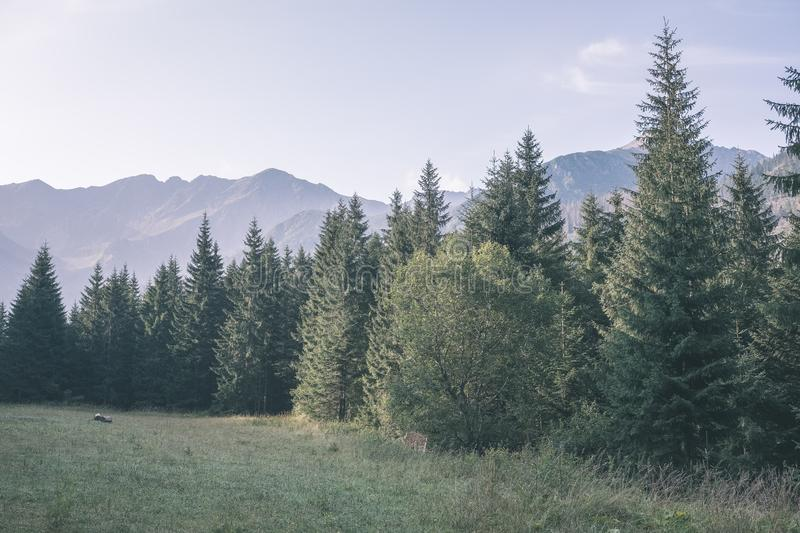 western carpathian Tatra mountain skyline with green fields and forests in foreground. summer in Slovakian hiking trails - vintage stock photography
