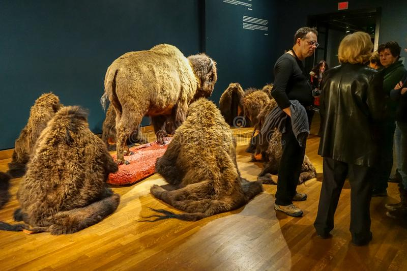 Western exhibition at Montreal Museum. For Montreal Museum of Fine arts exhibition named Western, installation showing buffalo extinction at the beginning of royalty free stock photography