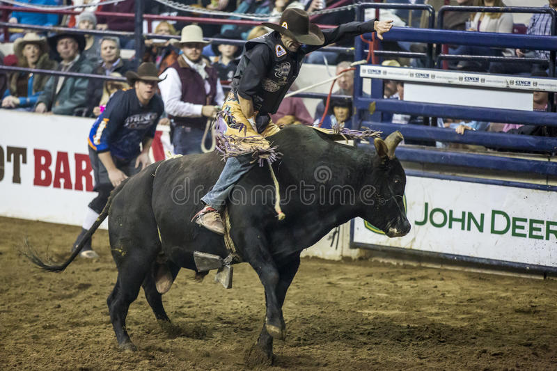 Western Stock Show in Denver. royalty free stock images