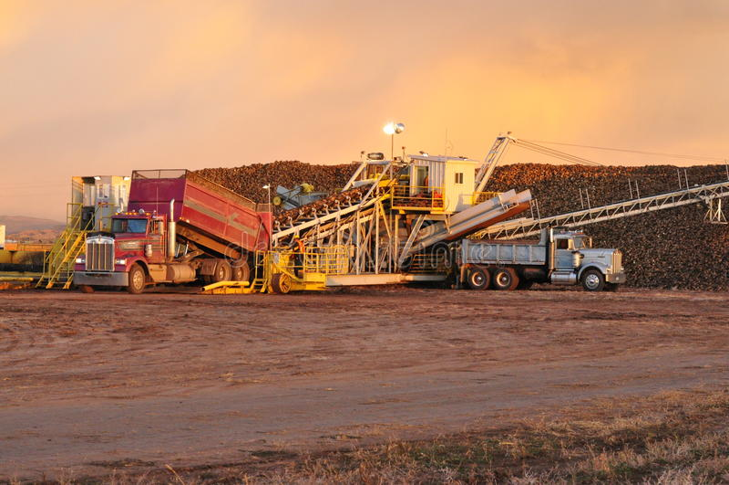A Western Sugar sugarbeet pile ground, Wellington, Colorado royalty free stock image