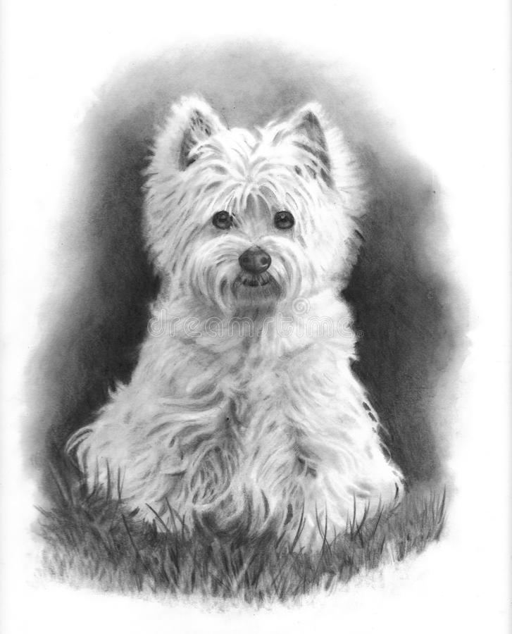Westie Dog, Pencil Drawing stock illustration