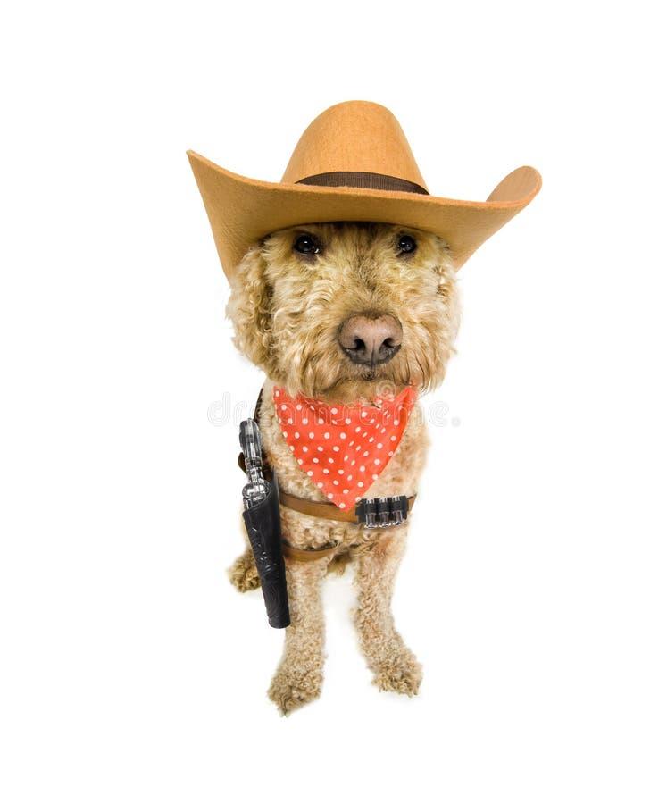 Westlicher Hund stockbild