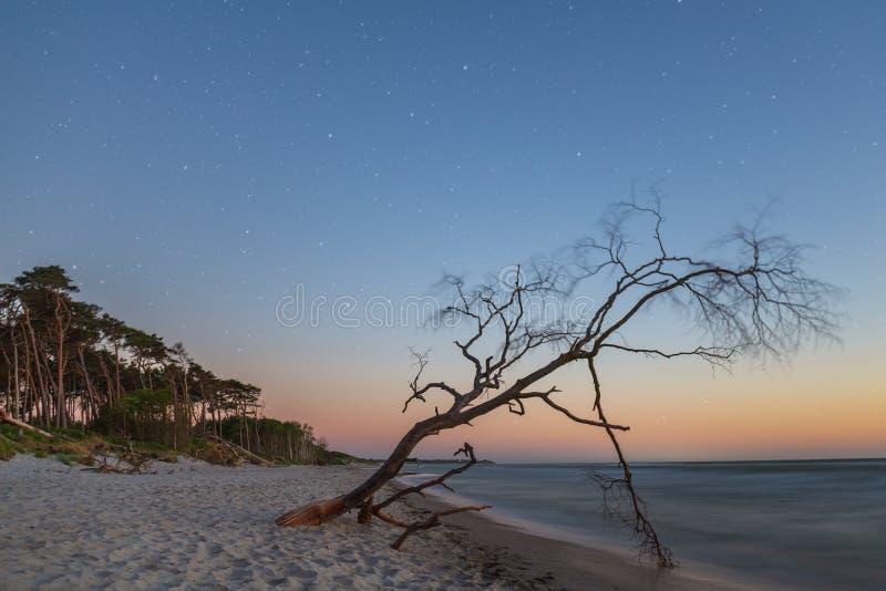 Weststrand sul Mar Baltico nella sera con il cielo stellato come esposizione lunga immagine stock libera da diritti