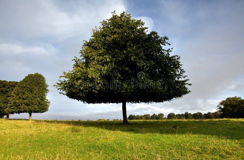 Westwood Yorkshire est Angleterre de Beverley photographie stock