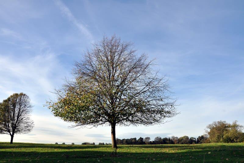 Westwood Yorkshire est Angleterre de Beverley images stock