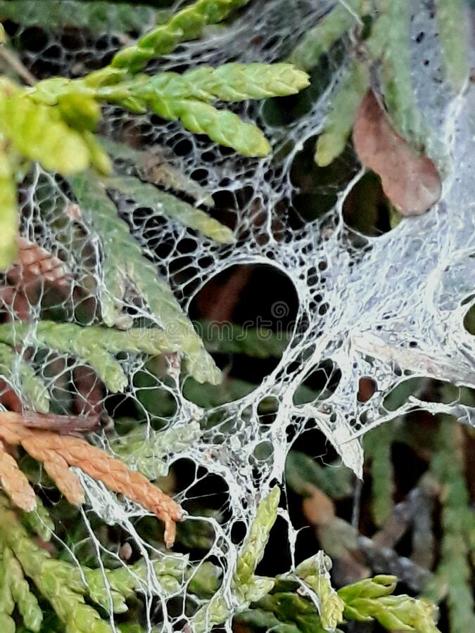 Wet abandoned spider web stock photos