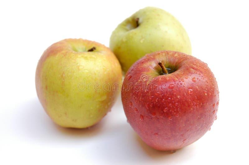Wet apples II stock photography