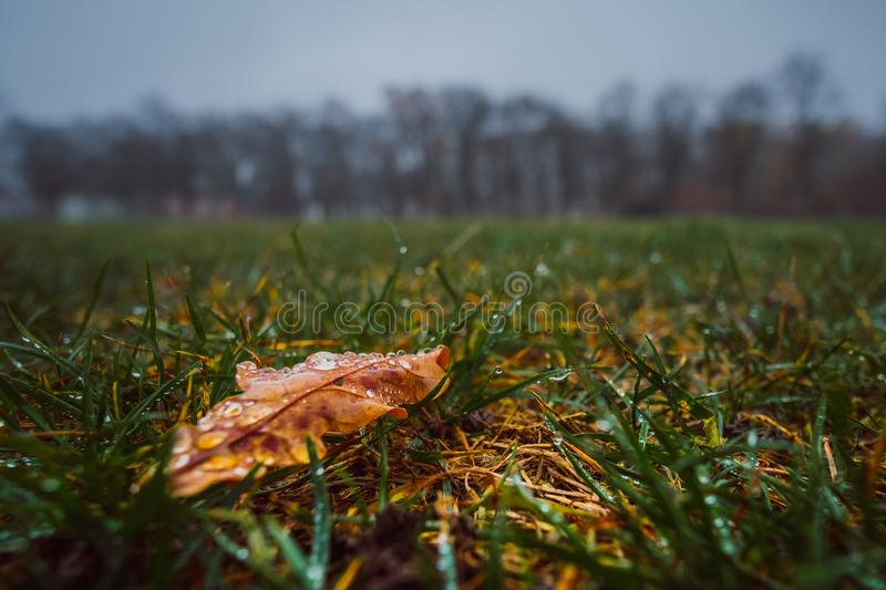 Wet Autumn leaf stock photo