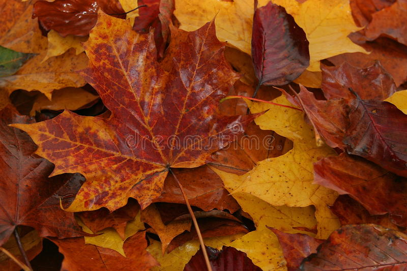 Download Wet Autumn Leaves stock photo. Image of ground, abstract - 11628446