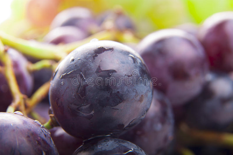 Download Wet Black Grapes stock photo. Image of fruits, focus - 28361508