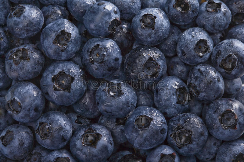 Download Wet Blueberries Background stock photo. Image of fruits - 10315634