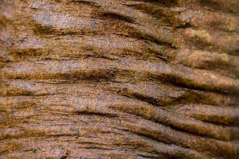 Brown creased tree bark macro selective focus royalty free stock images