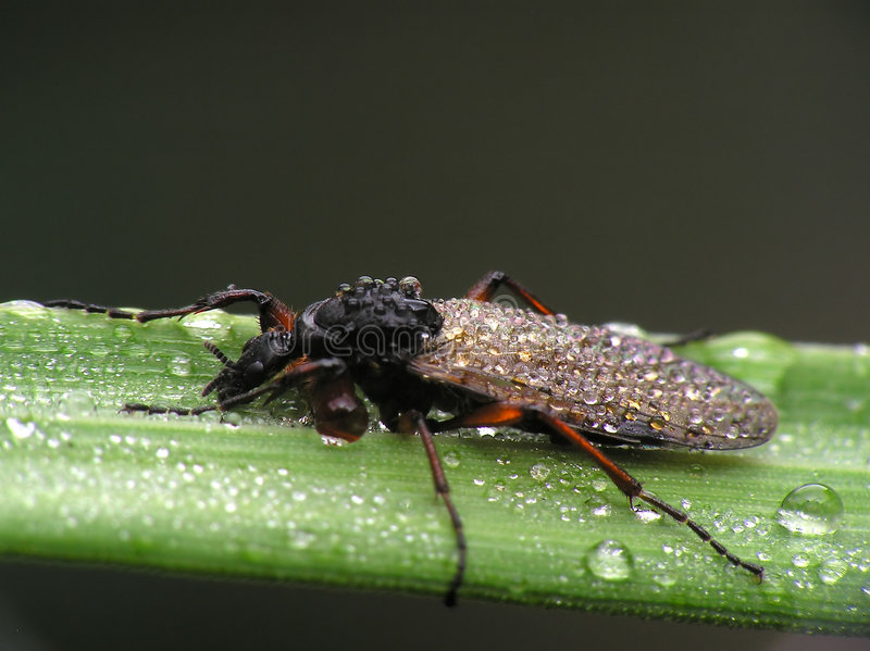 Wet bug royalty free stock images