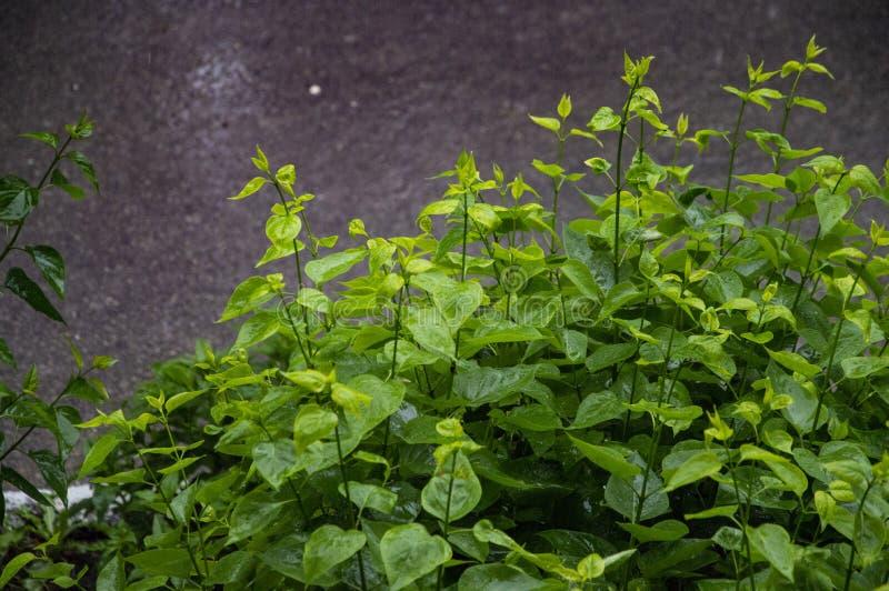 Wet bush branches and wet asphalt stock photos