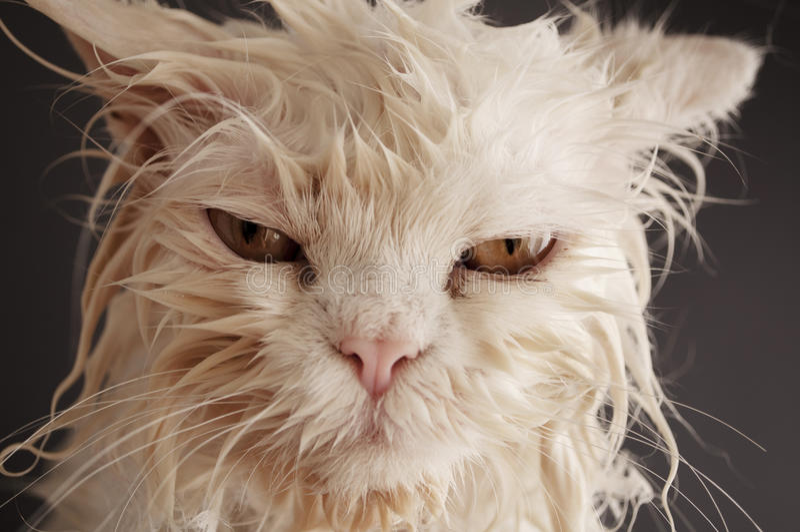Wet cat stock images
