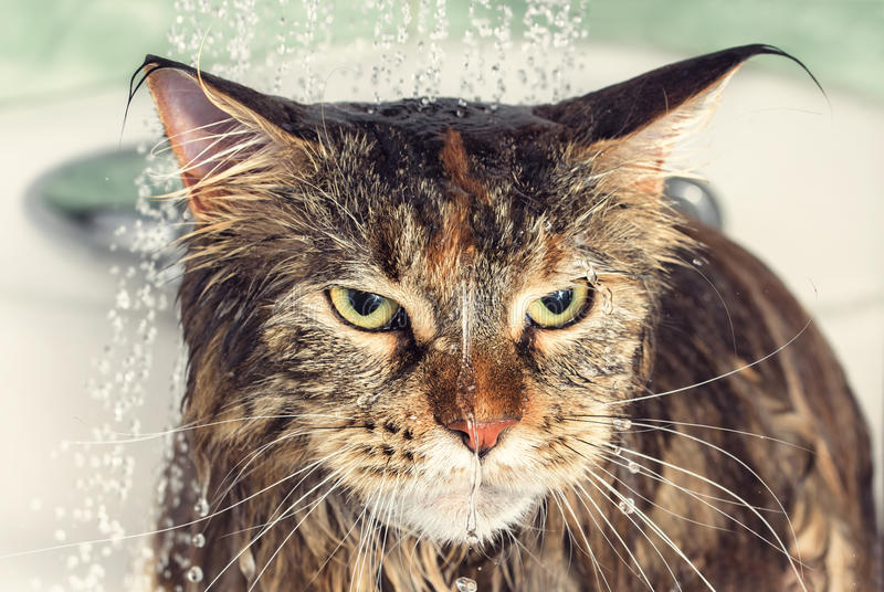 Wet cat in the bath stock photo