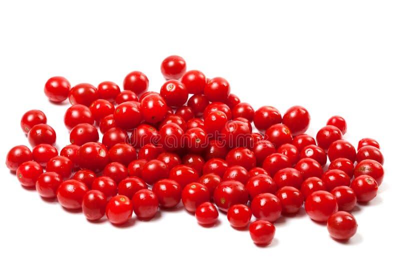 Wet cherry tomato. Isolated on white background stock image