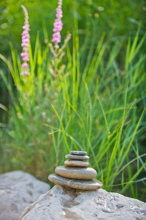 Download Wet cobbles stock photo. Image of plant, rock, flower - 26287930