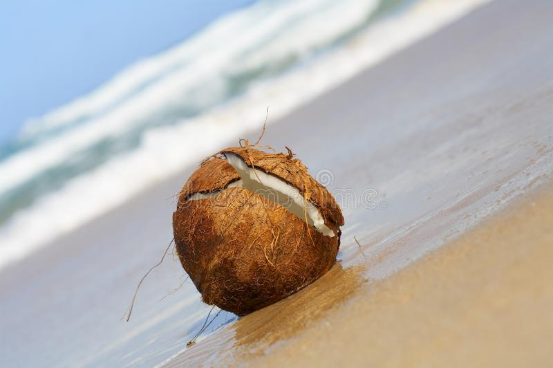 Download Wet coconut stock photo. Image of sprindrift, sand, coconut - 2777788