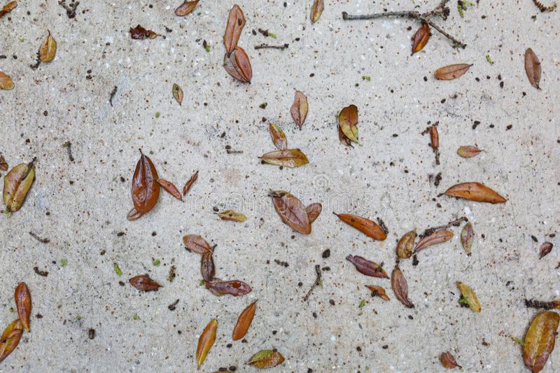 Wet concrete with oak leaves and sticks. This is a picture of a concrete slab just after rain. The leaves are in full focus as well as the water touching them royalty free stock image