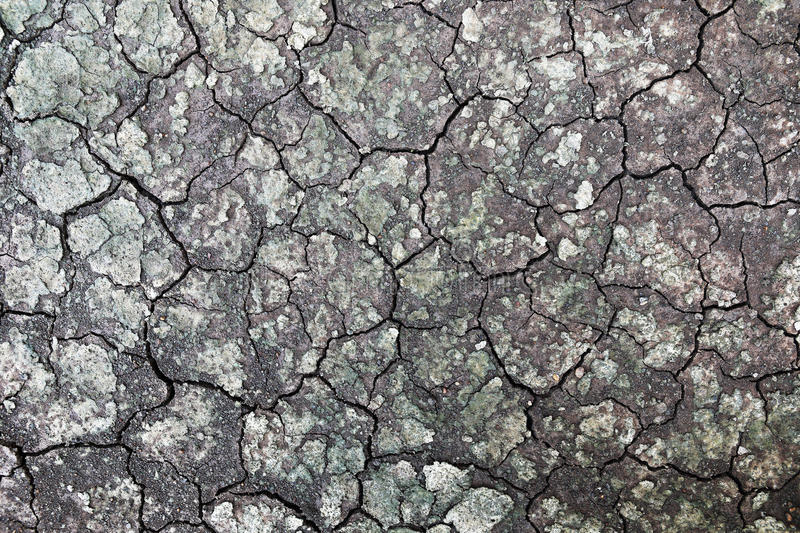 Wet cracked ground for pattern and background. It is wet cracked ground for pattern and background stock photo