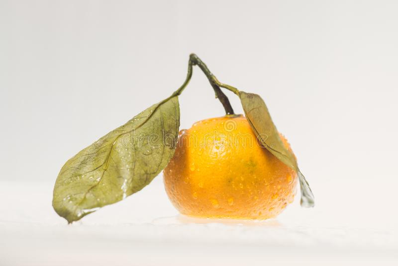 Wet dew Mandarin, tangerine citrus fruit with leaves isolated on white background. royalty free illustration