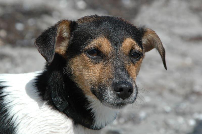 Wet dog lokking stock photography