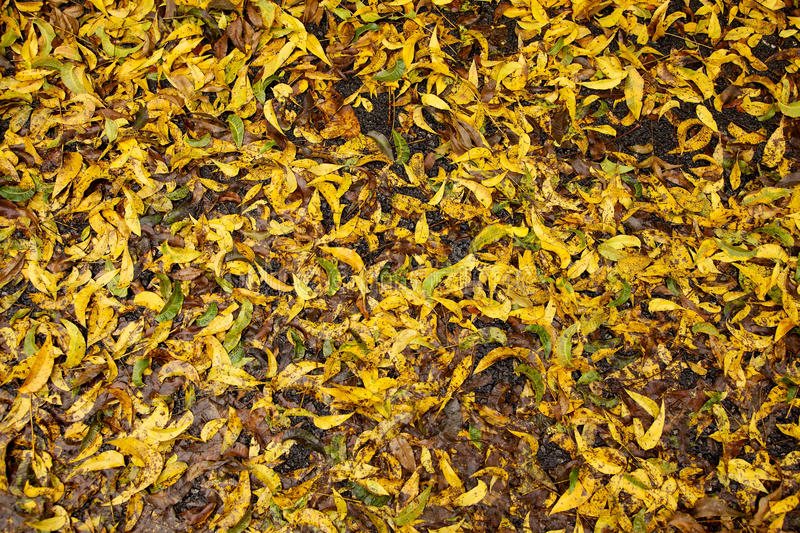 Download Wet Fall Leaves Royalty Free Stock Photos - Image: 28473668