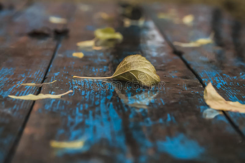 Wet fallen leaves on old crumpled blue table royalty free stock photography