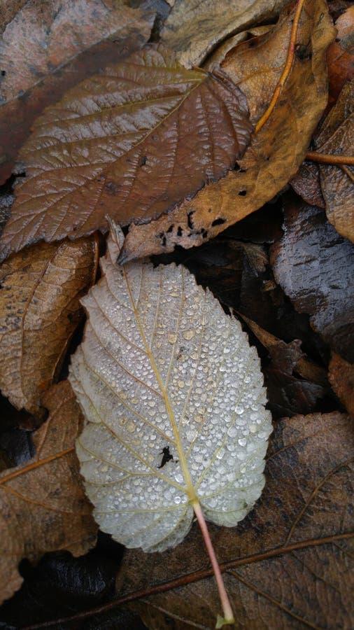 Wet of fallen leaves. Fallen leaves in rain drops under a tree in the garden stock photo