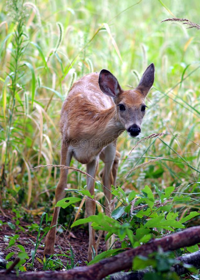 Wet Fawn Sees Something