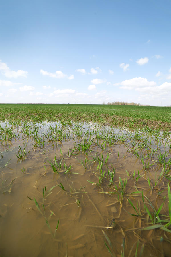 Download Wet field. stock image. Image of countryside, country - 24480369