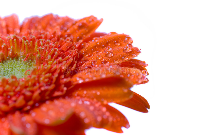 Wet Flower royalty free stock images