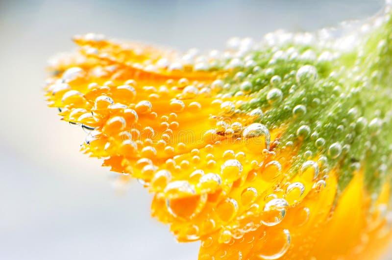 Wet Flower stock photo